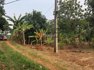 Dijual Tanah Luas Untuk Dibangun Rumah